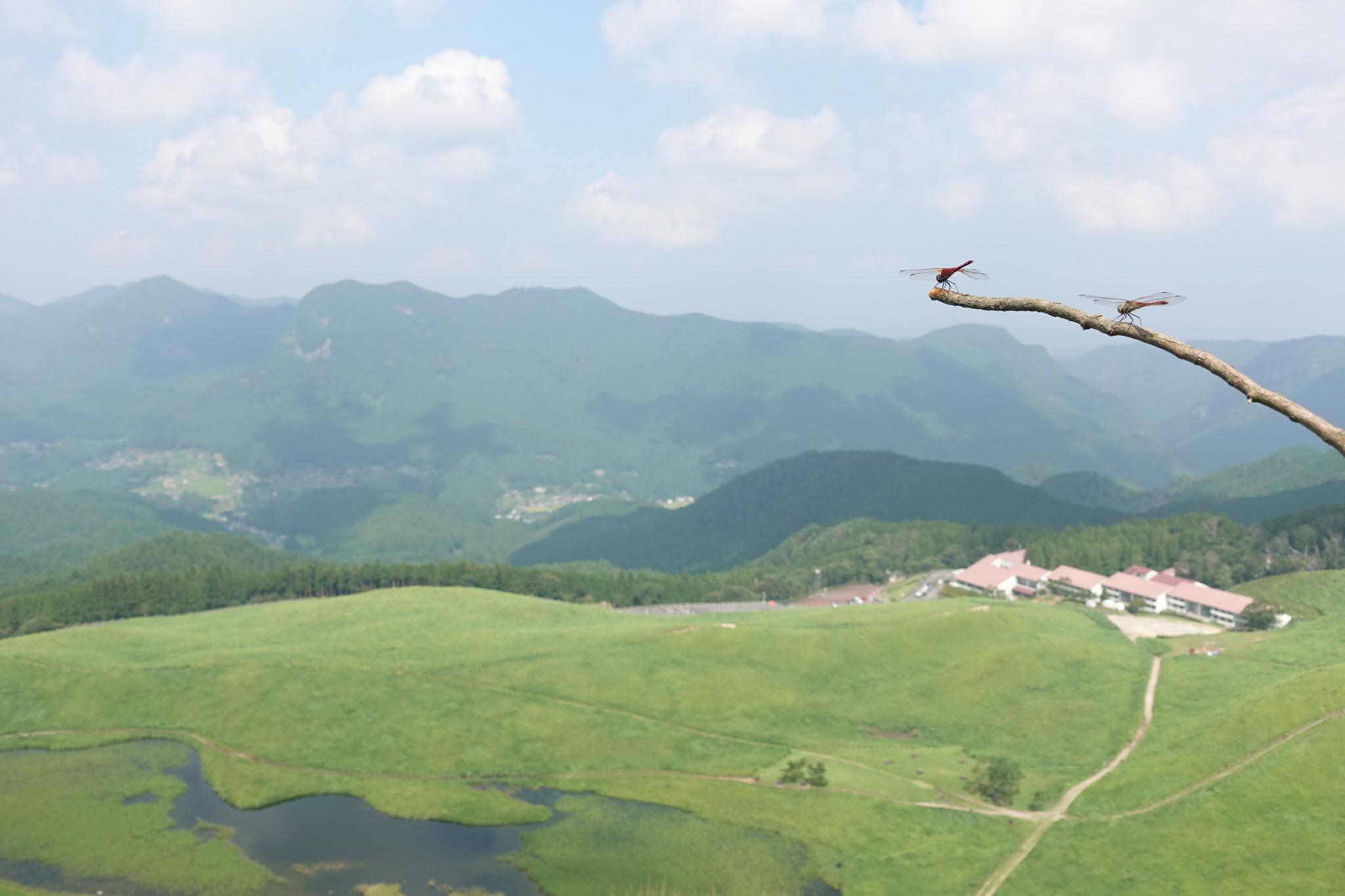 高原 キャンプ 場 曽爾